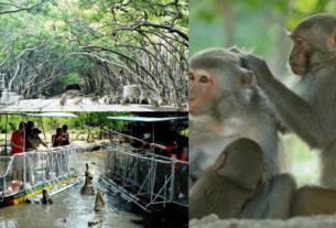 Đảo khỉ Cần Gờ